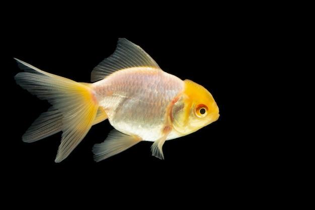 Tête de poisson blanc macro