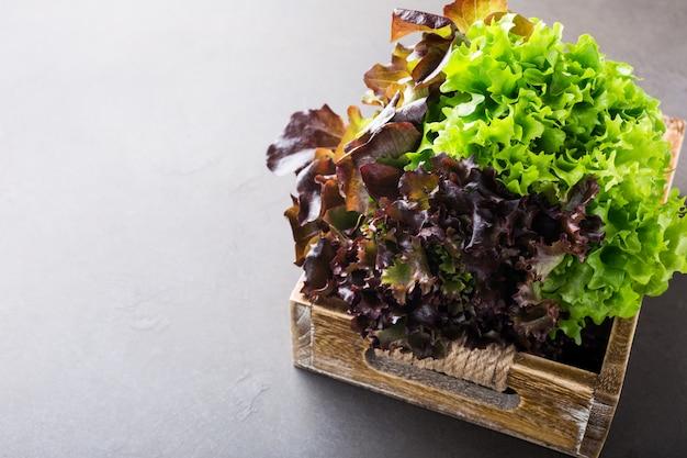 Tête de salade de laitue bio fraîche