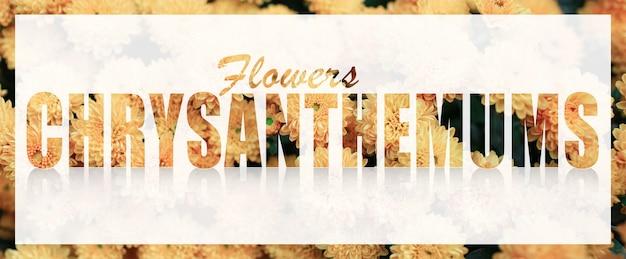 Texte de chrysanthèmes sur bannière blanche sur fond de fleurs jaunes.