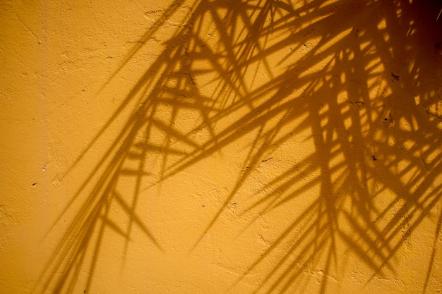 Textuer abstrait de feuille d'ombres sur un mur de béton