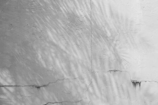 Textuer de fond abstrait noir et blanc de feuille d'ombres sur un mur de béton