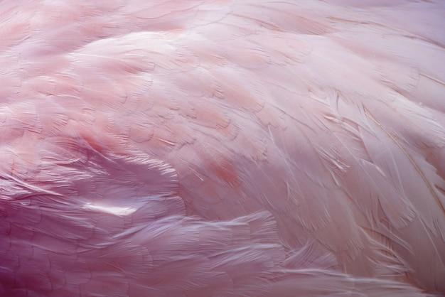 Texture abstrait de plumes de flamingo