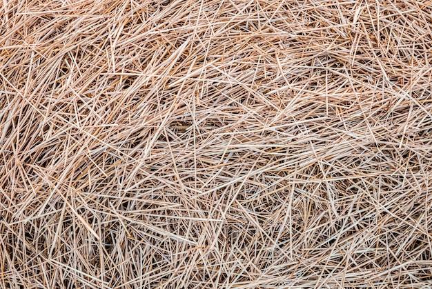 Texture abstraite de gros plan de paille sèche