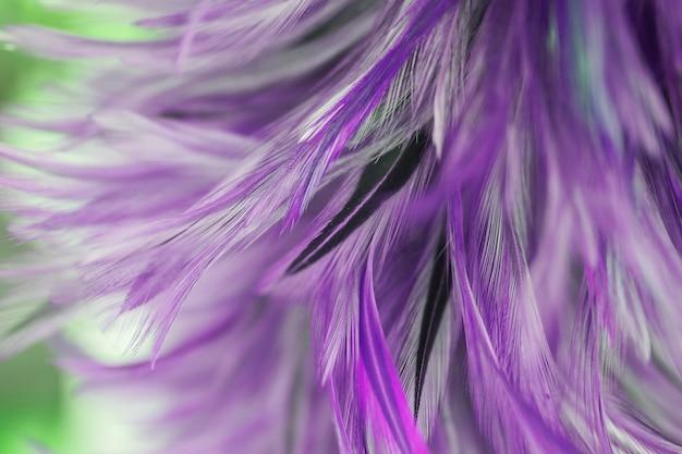 Texture abstraite de plumes de poulets pour le fond