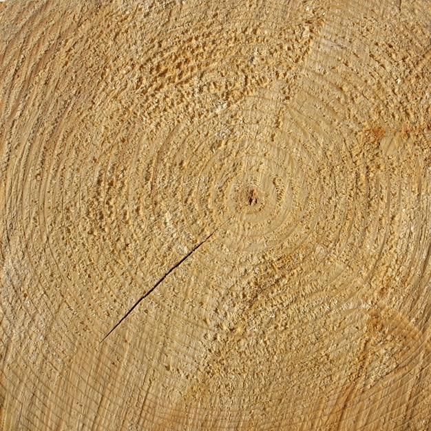 La texture des anneaux de bois