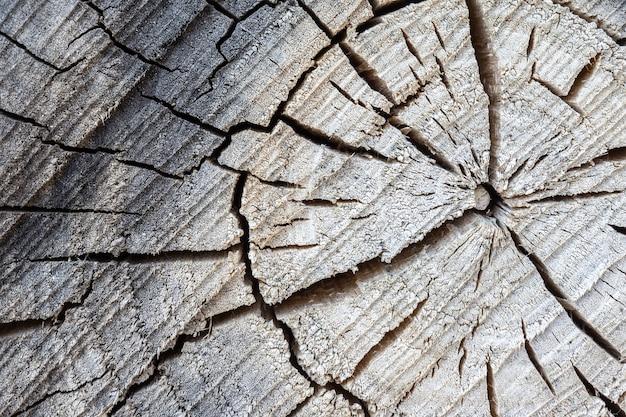 Texture d'arbre de fond