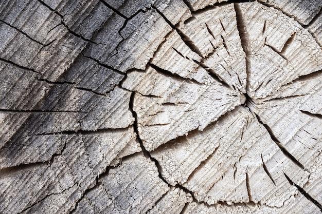 Texture d'arbre gris