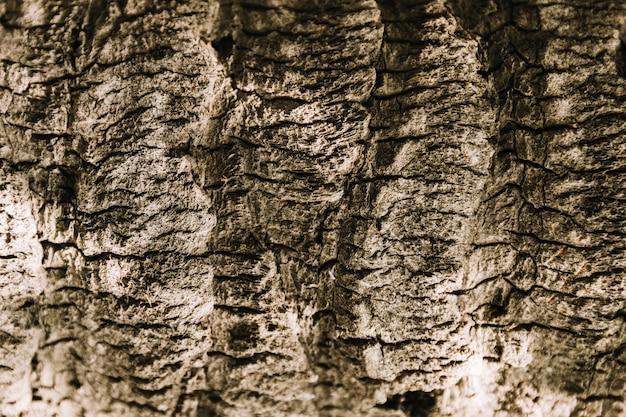 Texture d'arbre