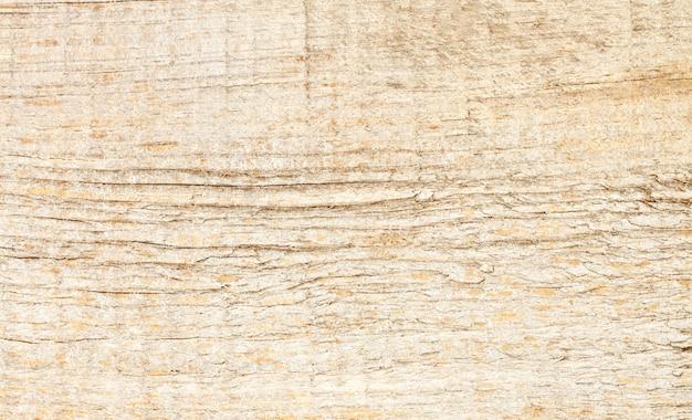 Texture d'arrière-plan de l'arbre coupé léger
