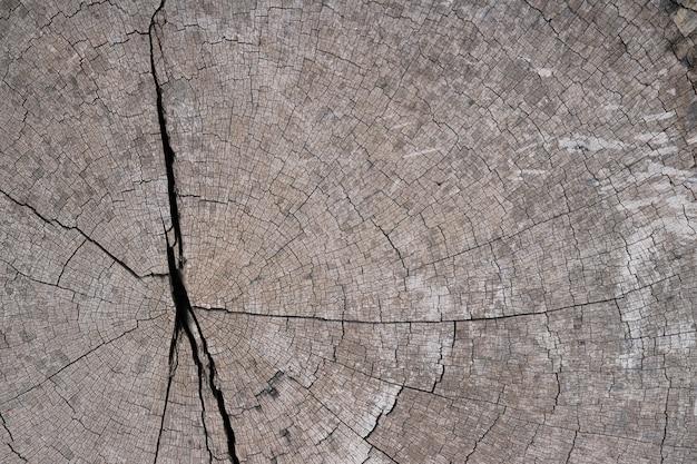 Texture d'arrière-plan de souche d'arbre
