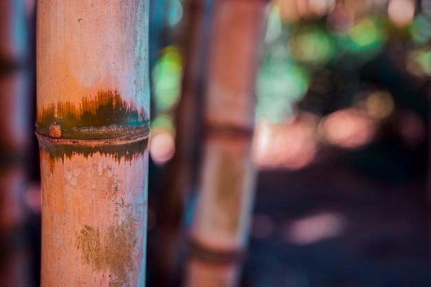 Texture de bambou