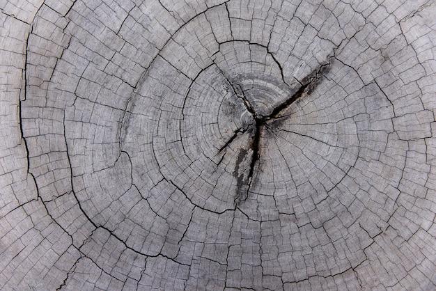 Texture de bois ancien naturel de souche d'arbre