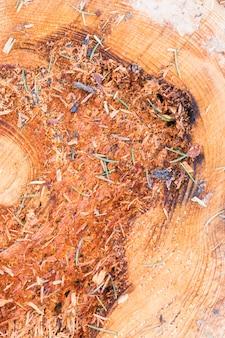 Texture bois avec des anneaux d'arbre