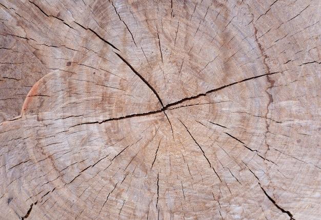 Texture de bois d'arbre pour le fond.