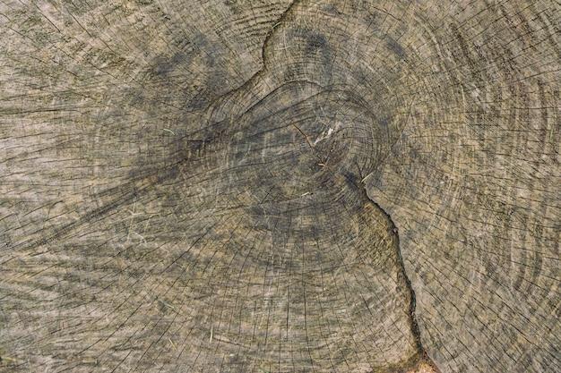 Texture en bois gros plan d'un arbre