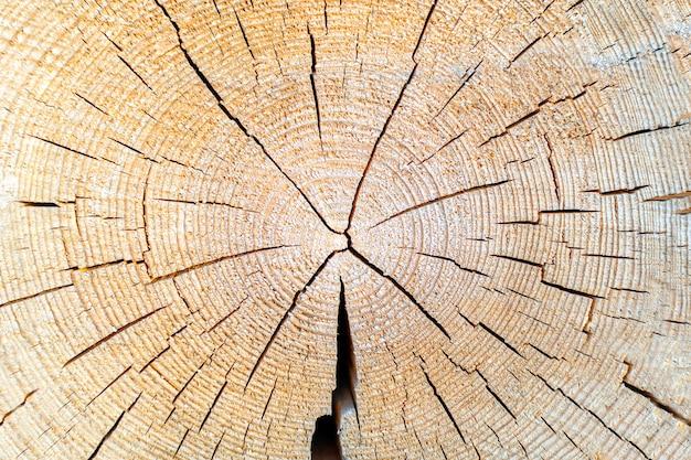 Texture en bois de souche de tronc d'arbre, coupe transversale avec anneaux annuels, tranche coupée de bois scié.