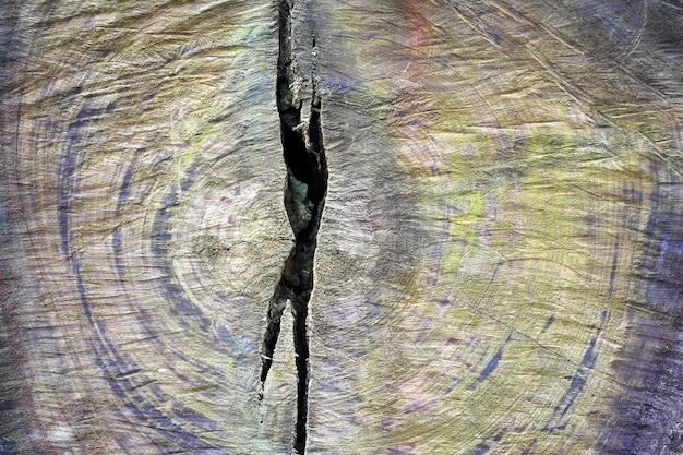Texture bois de tronc d'arbre coupé, gros plan