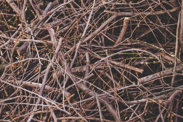 Texture des branches sèches, fond de nature.