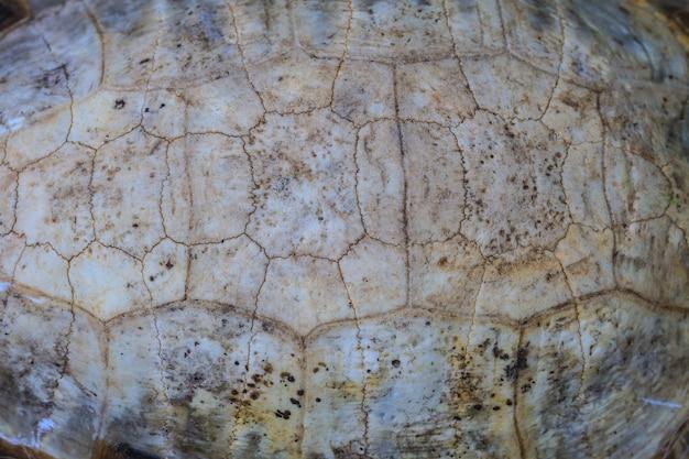 Texture de carapace de tortue