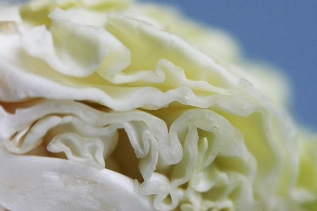 Texture de chou frais vert bouchent