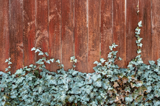 Texture de clôture rouge avec des feuilles de lierre.