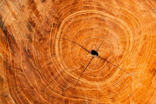 Texture de coupe de bois