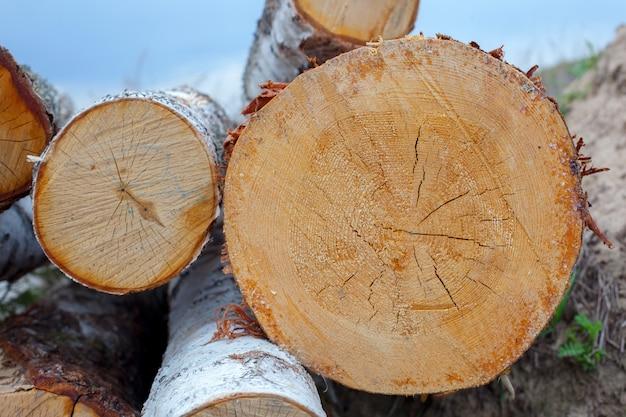 Texture coupée arbre coupé