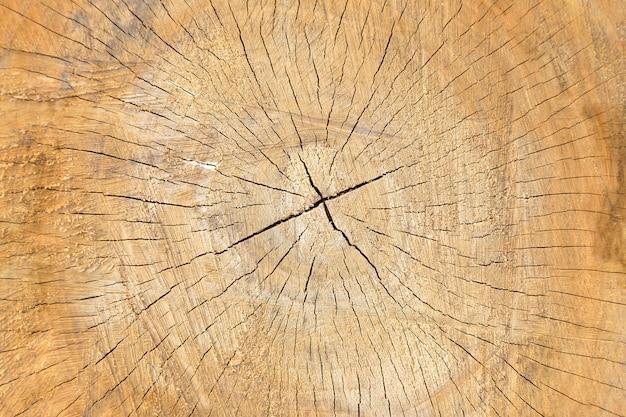 Texture coupée en bois, gros plan de fond