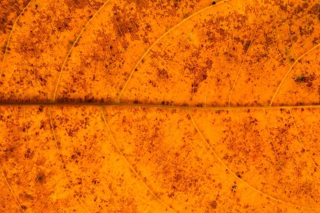 Texture et détail des feuilles sèches orange - fond