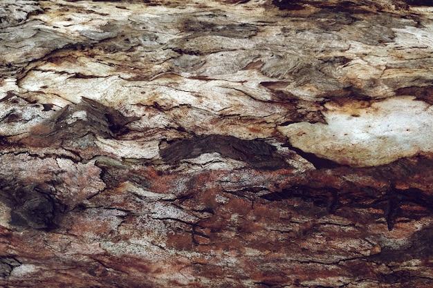 Texture détaillée du bois de l'arbre