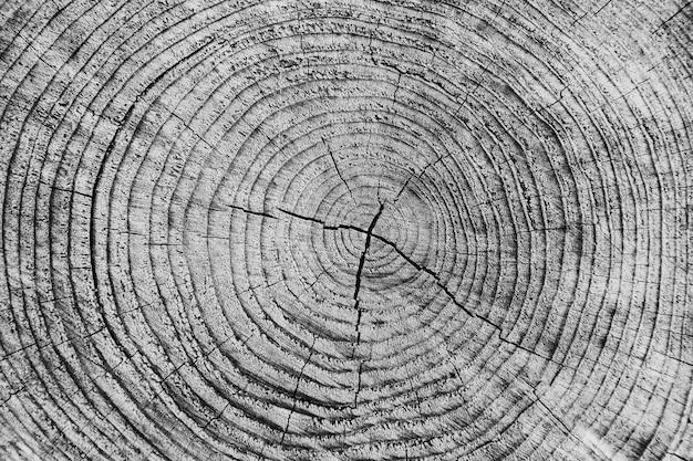 Texture du bois de l'arbre coupé