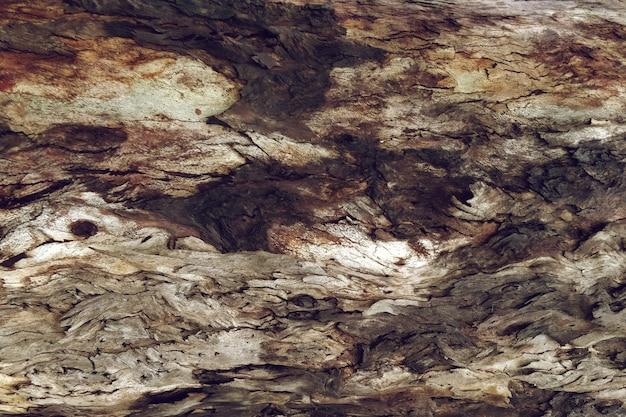 Texture du bois des arbres en détail