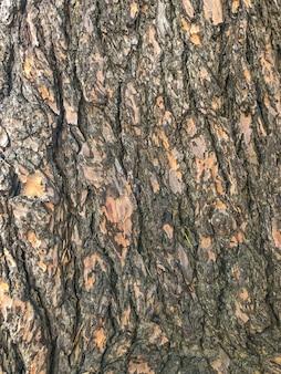La texture du bois, le bois à sotchi a augmenté la vision de l'écorce.