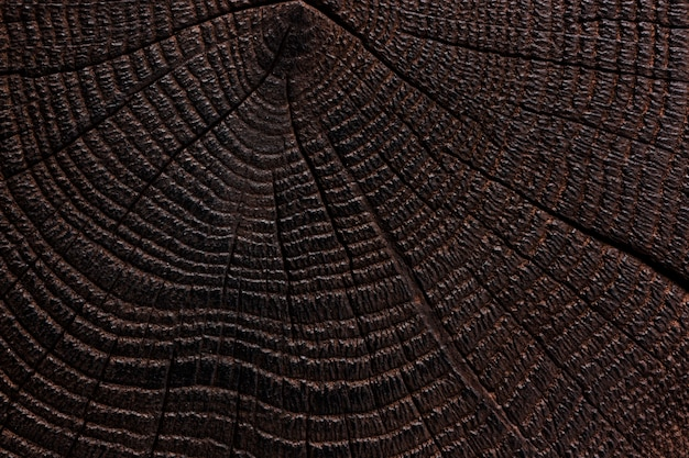 Texture du bois brûlé. bois sombre. fermer
