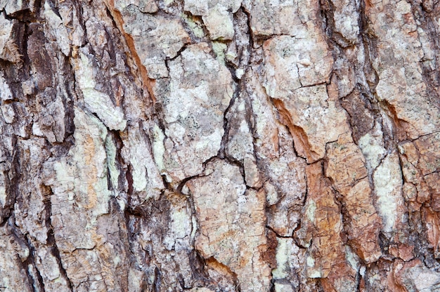 Texture du bois - détail du tronc d'un arbre
