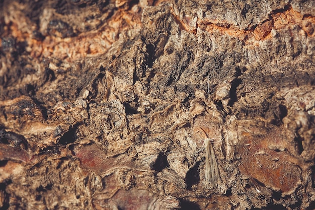 Texture du bois, écorce de bois, fond naturel brun abstrait avec flou, pissenlit sur fond de bois