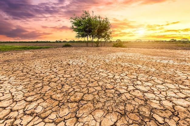 Texture du sol fissuré et arbre vert sur fond de ciel coucher de soleil