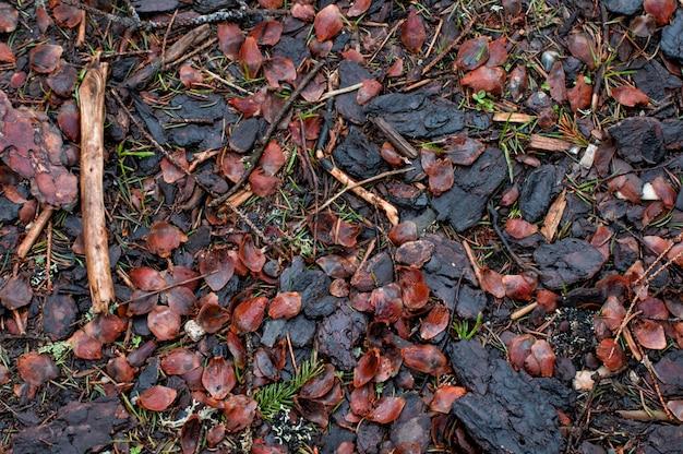 Texture du sol forestier, filtre vintage