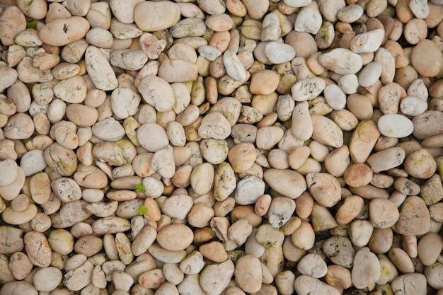 Texture du substrat rocheux