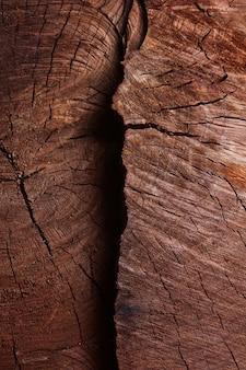 La texture du vieil arbre