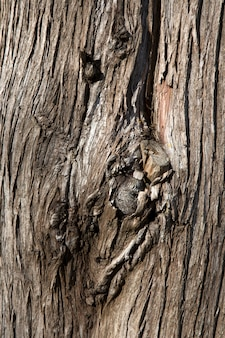 La texture du vieux bois brun foncé. écorce d'arbre, fond en bois. gros plan de texture de planche large, bannière panoramique.