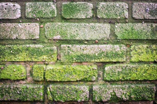 La texture du vieux mur de briques couvert de mousse verte