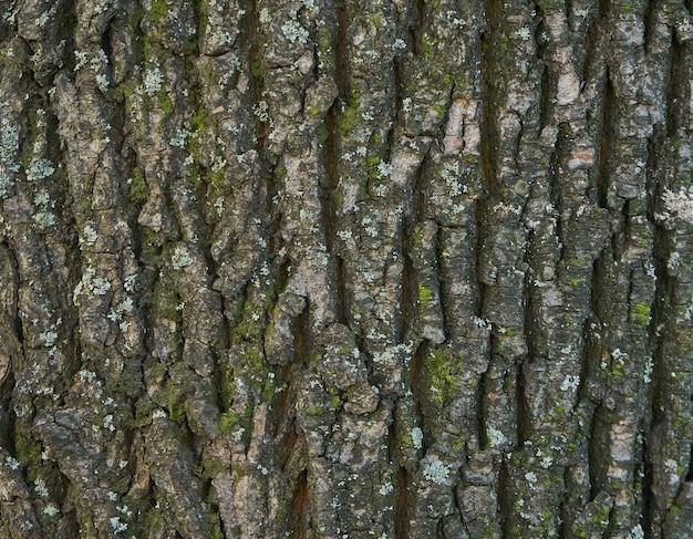 Texture d'écorce d'arbre - acacia. mur pour remplissage de page web ou conception graphique. modèle. carte de texture 3d. en bois
