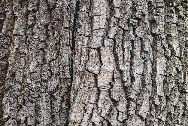 Texture d'écorce d'arbre ancien, gros plan