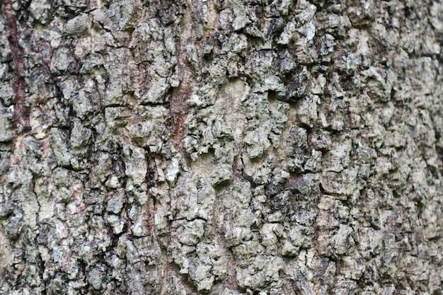 Texture d'écorce d'arbre en bois ancien