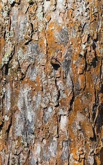 Texture d'écorce d'arbre brun de pommier