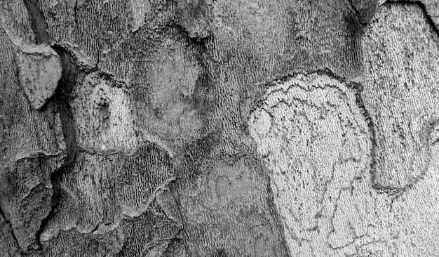 Texture d'écorce d'arbre en noir et blanc