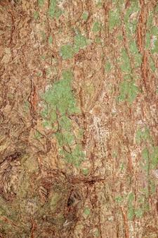 Texture d'écorce d'arbre pour le fond