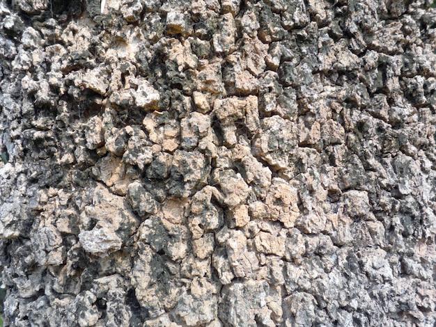 Texture d'écorce d'arbre