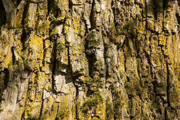 La texture de l'écorce des arbres